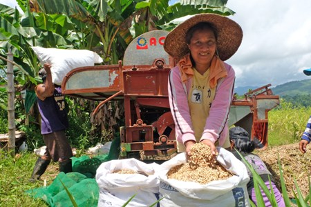 Farmer profits from shifting to adlay farming